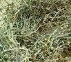 白花蛇草提取物