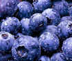 藍莓提取物