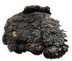樺褐孔菌提取物